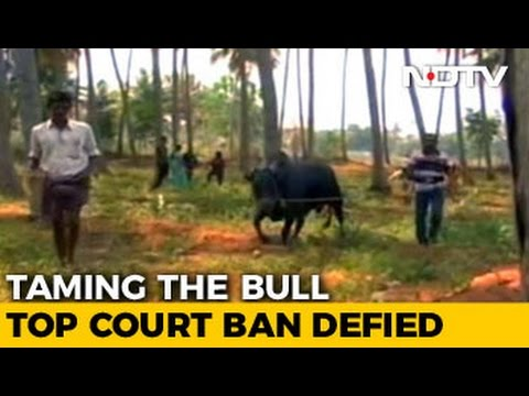 Instead Of Pongal Cheer, Protests Engulf Rural Madurai Over Jallikattu Ban