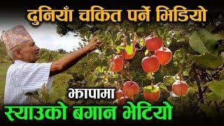 पत्याउनै मुस्किल  झापामा भेटियो स्याउको बगान    Apple Farming in Jhapa Nepal