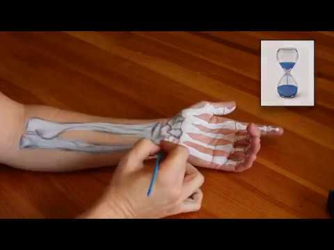 Anatomy Tutorial: UNDERSTANDING CARPAL TUNNEL SYNDROME