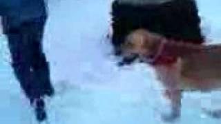 Dog having sex with human