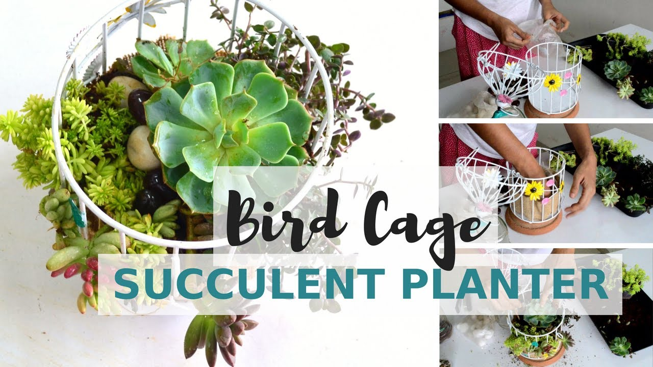 diy succulent cage planter without drainage garden up youtube. Black Bedroom Furniture Sets. Home Design Ideas