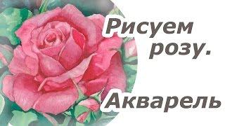 Акварель. Рисунок розы /  Watercolor. Drawing of rose. Time Lapse(Видео - демонстрация техники рисования акварелью цветка. Смотрите также другие мои видео: Рисование для..., 2016-01-25T18:43:17.000Z)