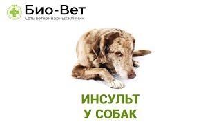 Инсульт у собак. Ветеринарная клиника Био-Вет.