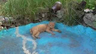 Кот нашел прохладное место. Животные прячутся от жары