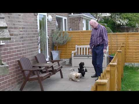 Terry Poole   All About Lhasa Apso's