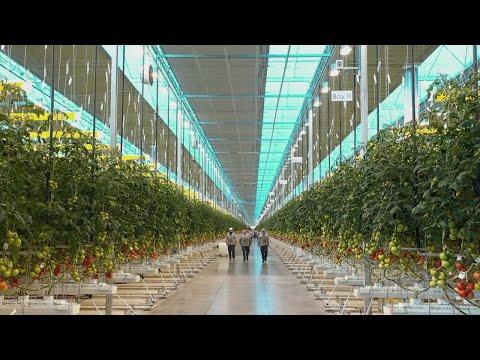 Start, Stay, Grow - Mucci Farms
