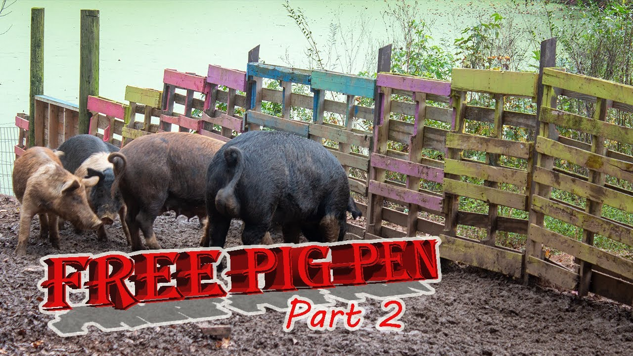 Building a pig pen on a budget part 2 youtube for Build a house on a budget