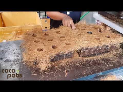 Biodegradable pots - Coco Pots factory visit to factory outside Bangkok