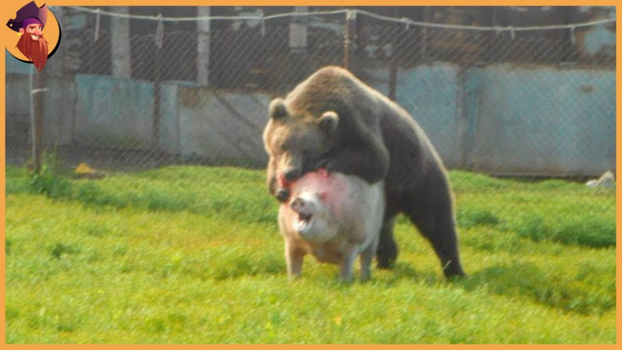 Download 15 Unbelievable Bear Attacks And Interactions Caught On Camera