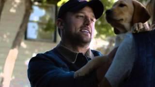 Реклама о дружбе щенка и лошади