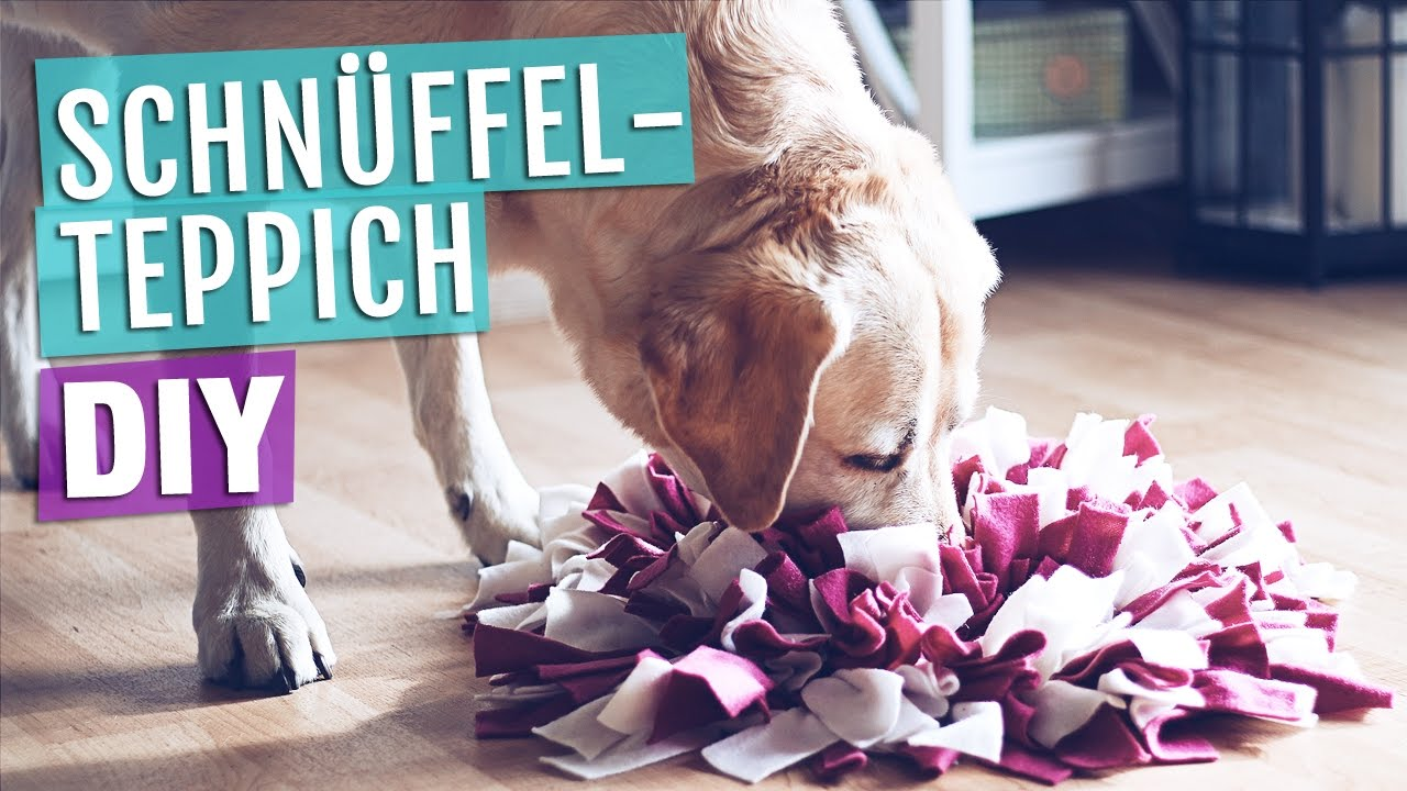 Hundespielzeug selber machen anleitung