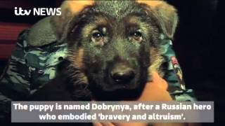 Adorable puppy gifted to France by Russia as gesture of