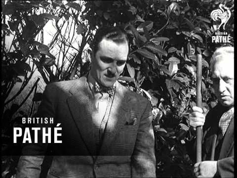 Houdini II Buried Alive (1949)