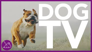 Dog TV: Virtual Dog Walk Along The Beach  Entertainment for Dogs 4K