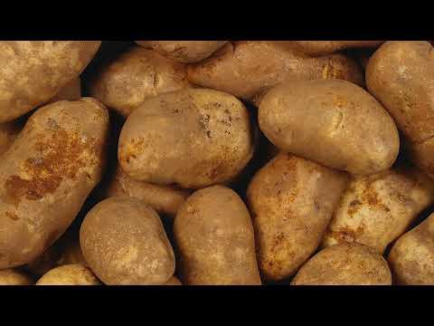 Как часто нужно поливать картофель после посадки в огороде, в открытом грунте?