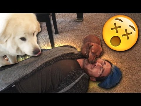 Playing Dead with PUPPIES!!