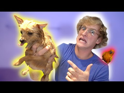 Thumbnail: WHAT HAPPENED TO MY DOG?! **exposed**