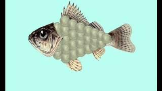 окружающий мир - рыбы
