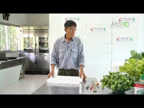 Hydro Box ปลูกผักไม่ใช้ดิน ต้นทุนต่ำ