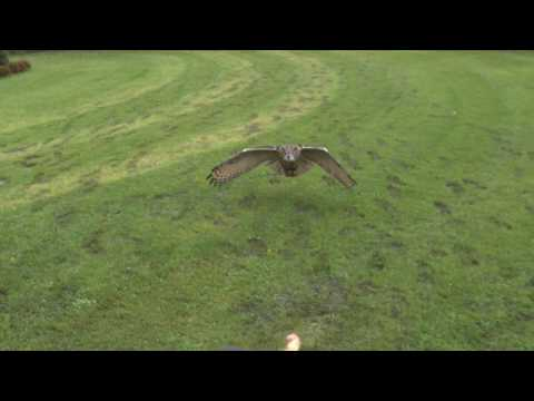 Full HD High Speed Movie - Eagleowl - Photron SA2