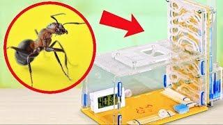 Cómo construir una granja de hormigas en casa