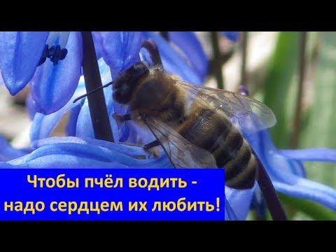 Настоящий Добрый #Мёд из пчелопарка #Ерёмчино - #Вейделевка Белгородская область
