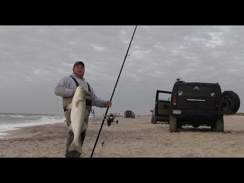 Big Stripers From The Beach, With Billy Fischer