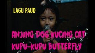 Kucing Cat Anjing Dog Kupu kupu Butterfly  (Cover by Agsa Aqila)