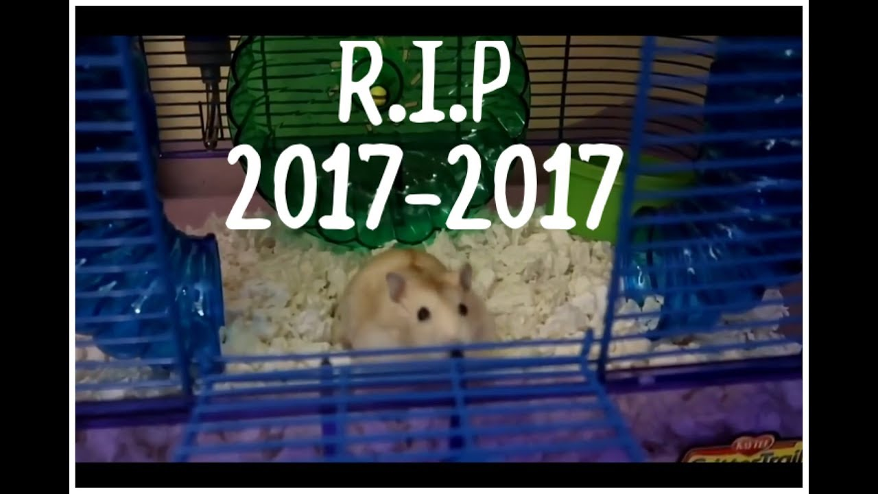 R.I.P 2017-2017 Faze Hammy (Faze Rugs