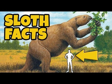 10 Interesting Facts About Sloths - YouTube