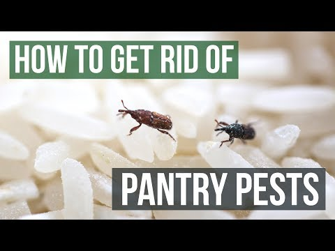 How to Get Rid of Pantry Pests Guaranteed