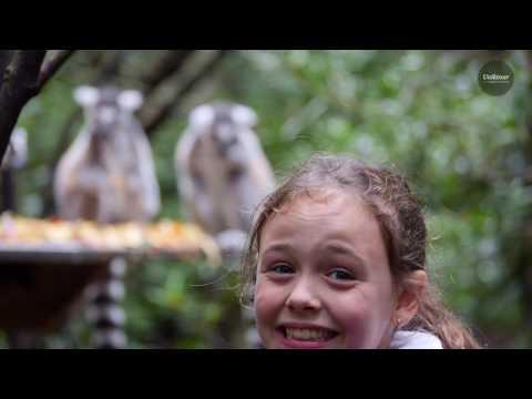 Film De Voyage Famille Afrique Du Sud (version Longue)