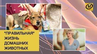 Домашние животные в Беларуси будут содержаться по новым правилам?