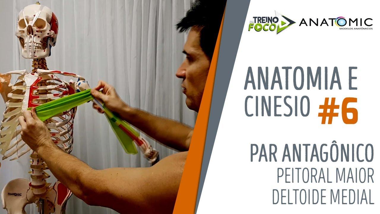 Par antagônico - Peitoral Maior e Deltoide medial - Anatomia e Cinesiologia #6