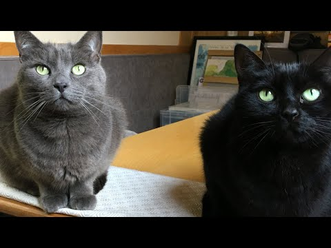 Narrowboat Cats (our TOP TIPS)