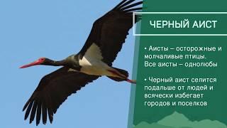 Животные под угрозой - Приволжский федеральный округ