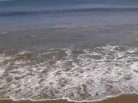 SHARKS AT VA BEACH!!!