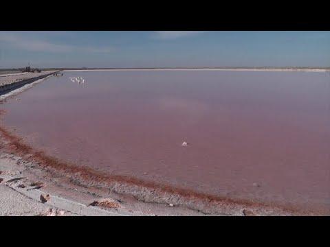 هل سمعت عن -الملح الوردي- أو -ملح هيمالايا-؟  - نشر قبل 3 ساعة