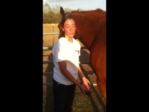 How to clean a horse's hoof