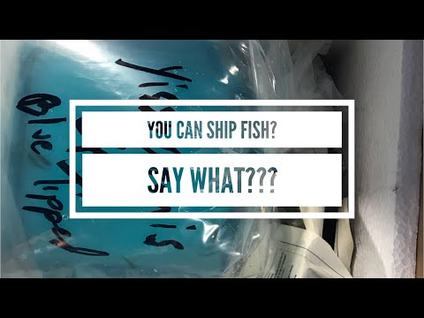 How To Ship Fish | Cunningham Cichlids