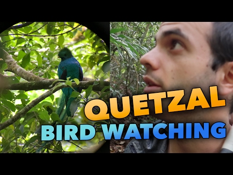 QUETZAL BIRD WATCHING IN COSTA RICA - TRAVEL VLOG #156