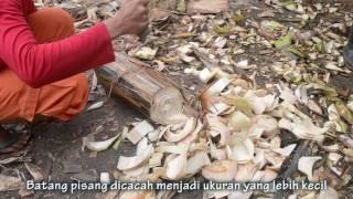 Pemanfaatan Limbah Batang Pisang Sebagai Kompos Dalam Memenuhi Kebutuhan Nutrisi Tanaman
