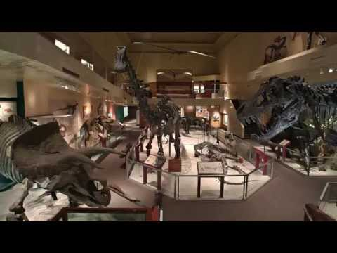 Secrets of the Fossil Hall