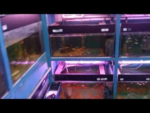 Irene's aquarium shop , petaling jaya