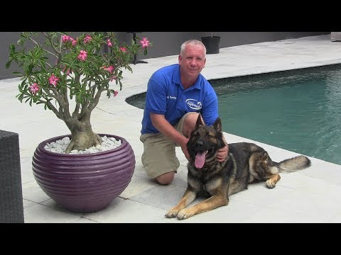 A Tribute to one of dog training's very best - Richard Heinz 'The Miami Dog Whisperer'