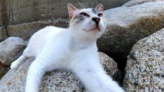 防波堤で休む野良猫たちをナデナデしてきた
