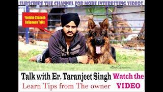 Talk with Owner of Zift (Fanino)  and Black(Timit Tor) GSD + Rott Er. Taranjeet Singh (Er. Kennel)