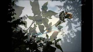 2011浜省秋祭り「初秋」の開幕はアルバム「初秋」より我が心のマリアを...