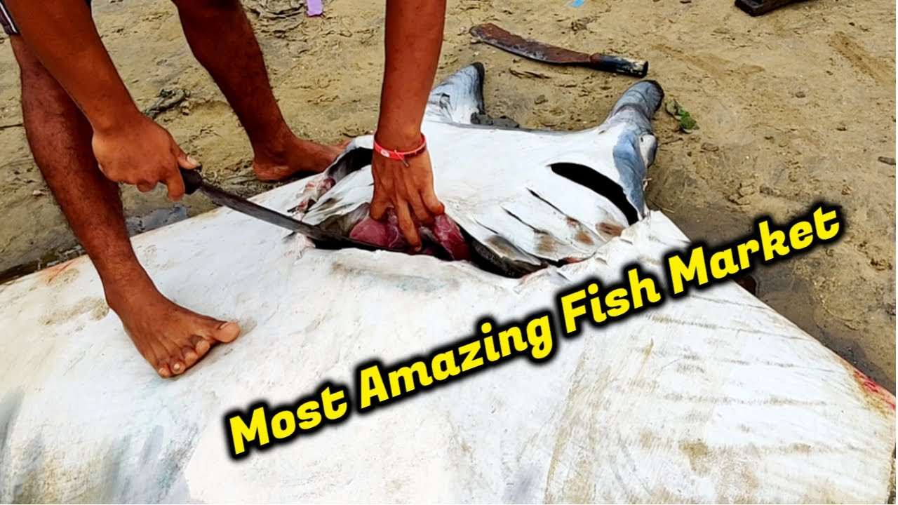 Most Amazing Live Fish Market In India | Biggest Fish Cutting Videos | Live Seafood Markets Indian
