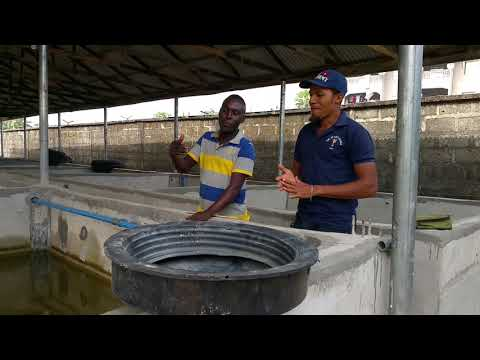 THIS WILL INSPIRE YOU TO STARTING UP OR REOPENING YOUR FISH FARM; HUGE INVESTMENT, HUGE TURNOVER.